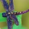 Avatar dragonfly_374