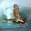 Avatar Sea_hawk