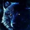 Avatar WereWolf-Lord